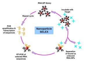 Nanoselex jpeg cropped