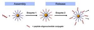 enzyme release jpeg